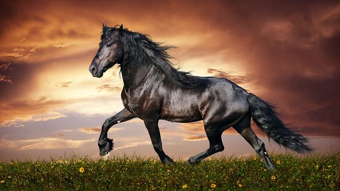 10-104182_cool-black-horse-hd-animal-wallpaper-beautiful-horse