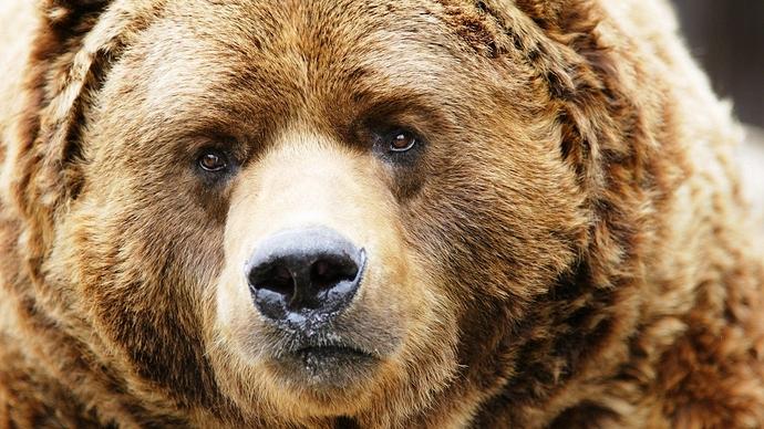 bear_muzzle_brown_close-up_29268_1920x1080