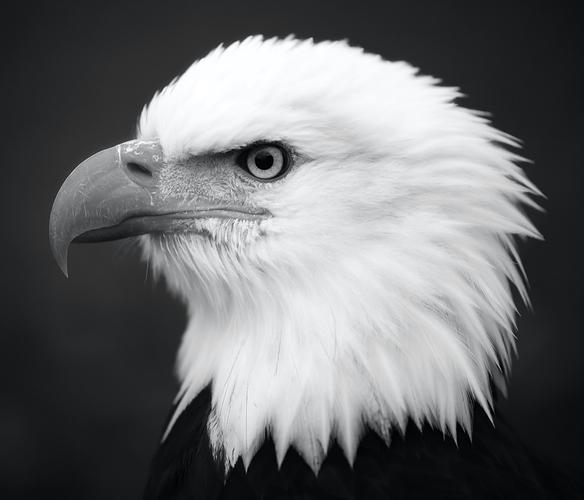 white-bird-2195061