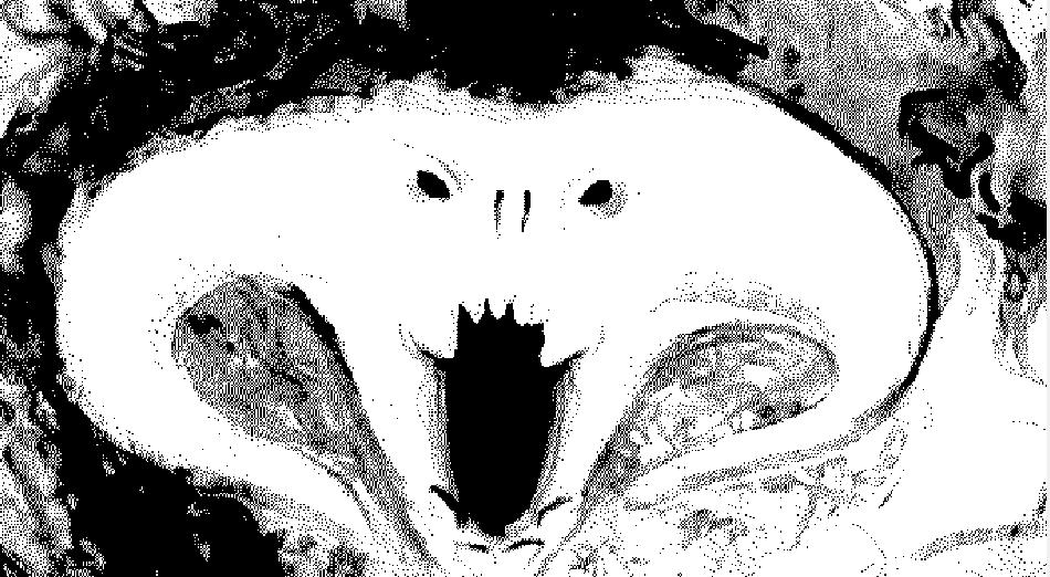 Adjust Image
